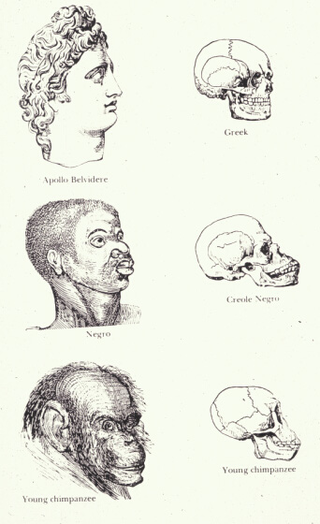 320px-Races_and_skulls.png